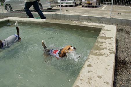 100801-38chara swim4