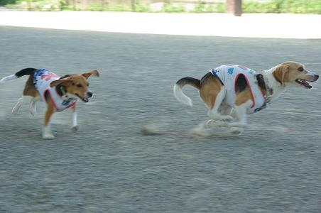 100807-07sumomochoko run