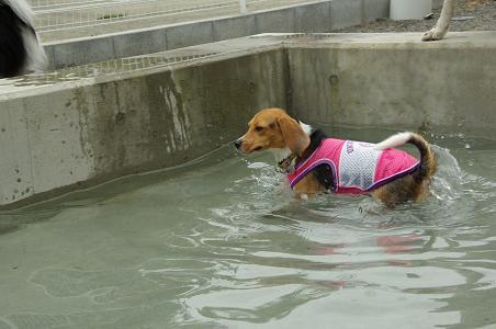 100808-08sumomo swim