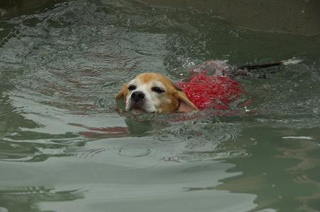 100808-15cooky swim2
