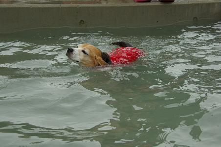 100808-16cooky swim3