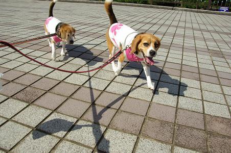 100811-04cookychara walk