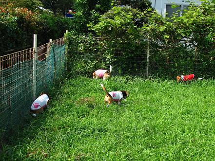 100822-10radies eat grass