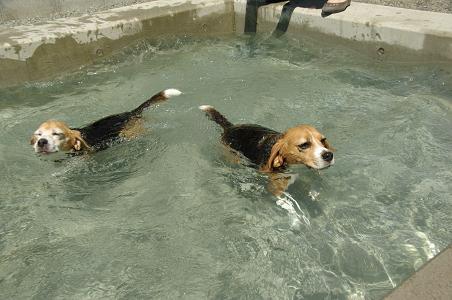 100829-24cookychara swim