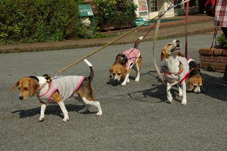 100920-02radies in doggy park