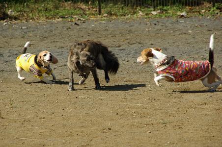 101023-23cooky,dogchoko