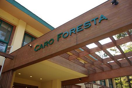 101106-20caro foresta