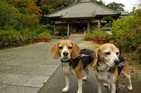 101123A07characooky in shimoda ryousenji
