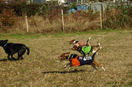 101128-19lavbeagles run1