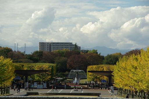 111112-34shouwa kinen park tachikawaguchi view