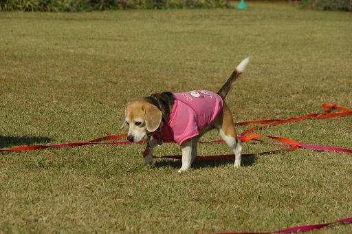 111123-23cooky walk03