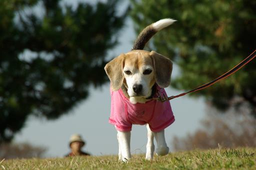111123-27cooky walk04