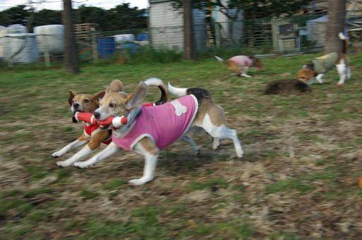 111225-16sumomochoko run