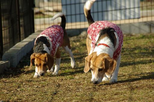 120104-04sumomochoko walk