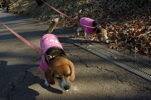120107-09characooky walk