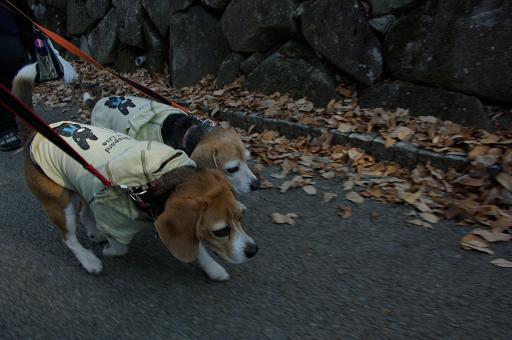 120109-17characooky walk on yuhodou