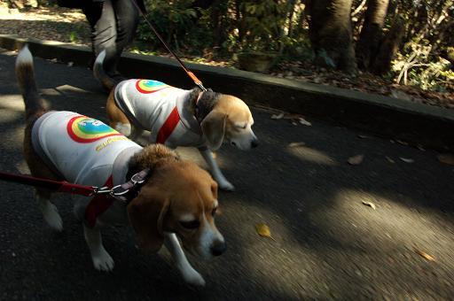 120114-29characooky walk on kannonzaki park