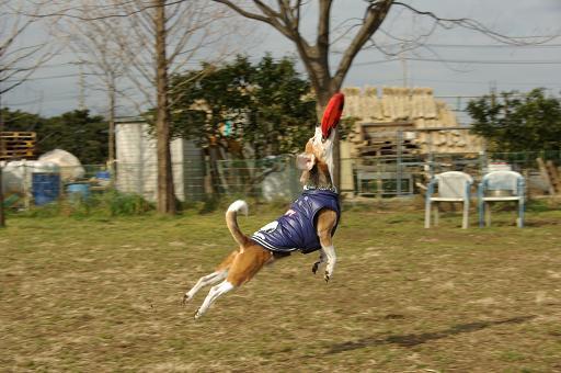 120205-18bel jump02