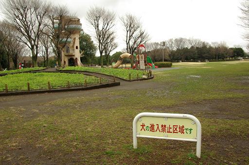 120310-21shibafu hiriba view