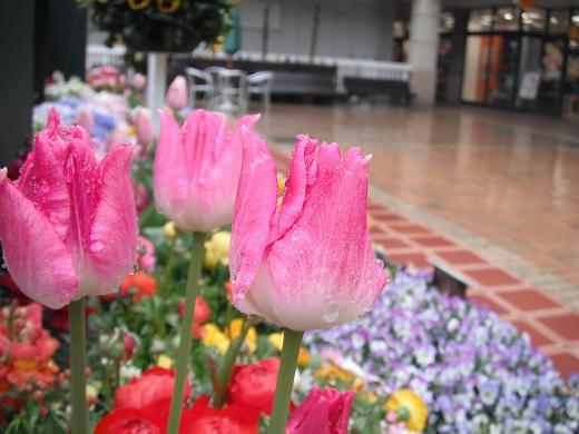 120317P-09 flower01