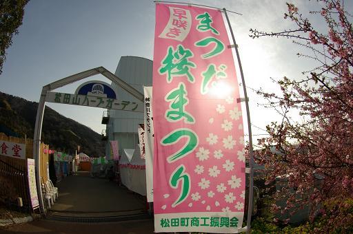 120320-01matsuda sakura