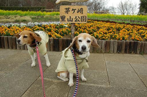 120331-04characooky satoyama park