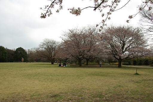 120407-36sakura of serizawa park01