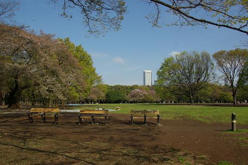 120415-03yoyogi prak view