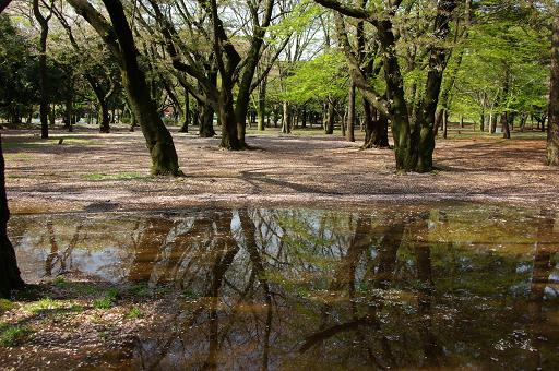 120415-06yoyogi park view02