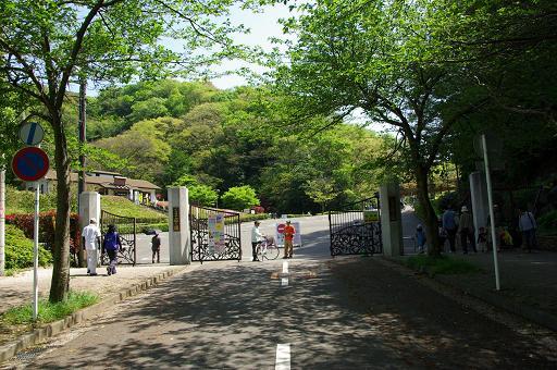 120428-42kurihama hananokuni