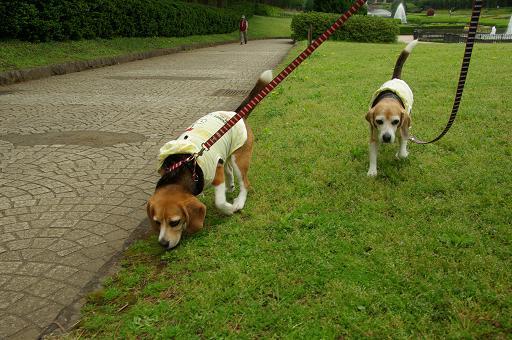 120430-12characooky walk on funsui hiroba