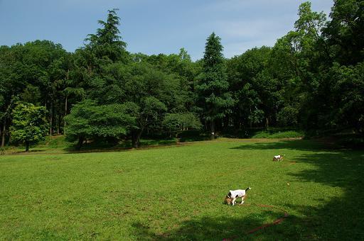 120526-11tsuruma park view