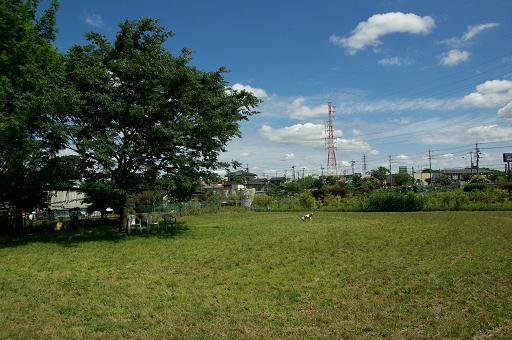 120610-10hirukawa view