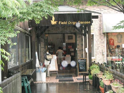 120616-03F field dogs garden