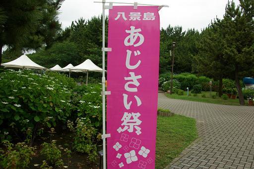 120623-06ajisai matsuri