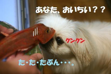 1DSC00663.jpg