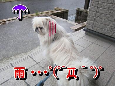 雨 ・・・border=