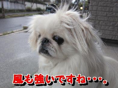 風も強いですね・・・。