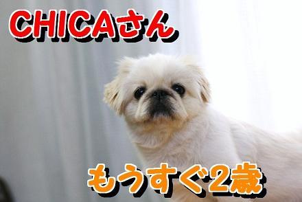 CHICAさん