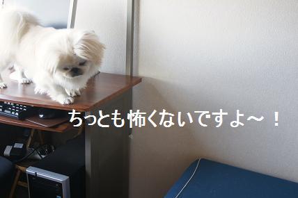 DSC001364.jpg