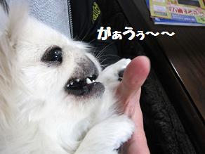 IMG_1101.jpg
