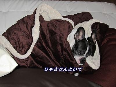 寝てる (1)