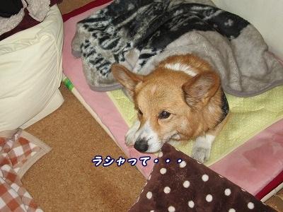 甘えん坊 (4)