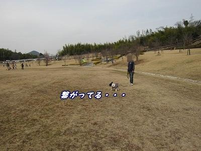 ダッシュ (10)