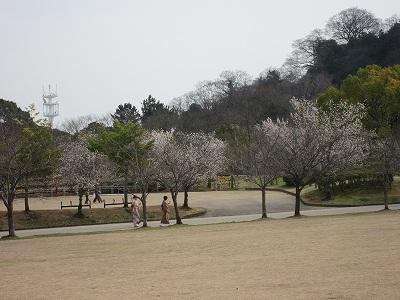 お花見 (9)