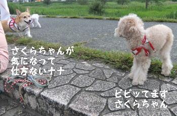20110925n2.jpg