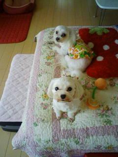 moblog_fe9df1a9.jpg