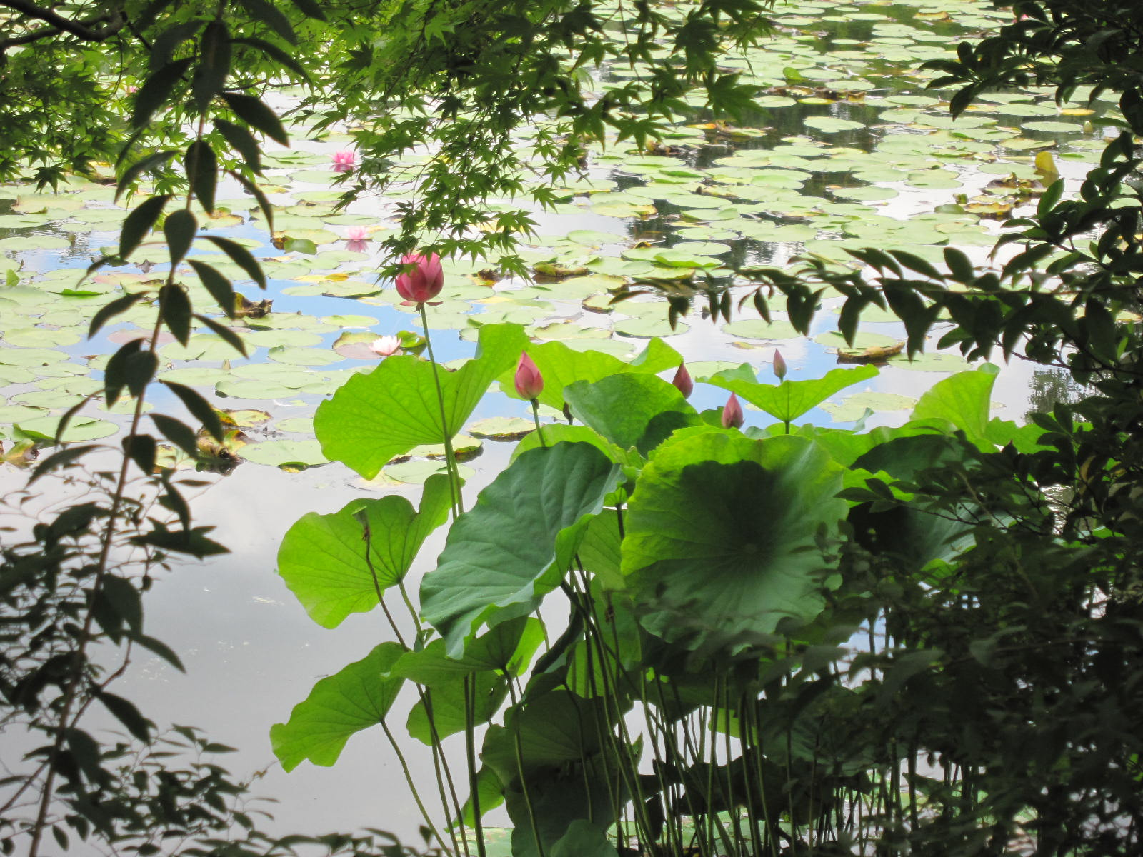 10.7京都・祇園祭 614