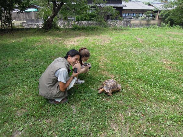 カウチサーフィン(アメリカ、エイミーとダレル)、亀