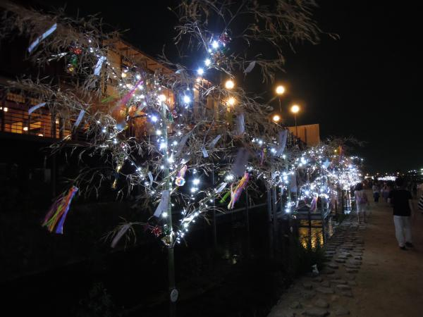 京の七夕・鴨川会場、笹のライトアップ・その2